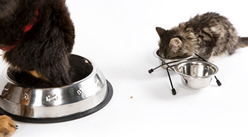 aller pet food