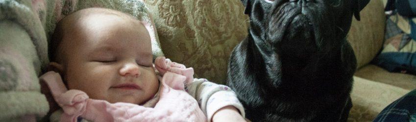 kids and pets // børn og kæledyr